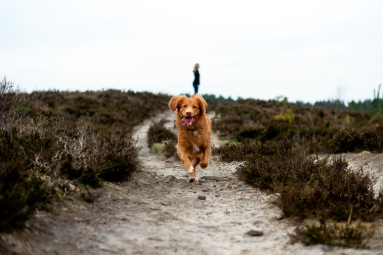 The Unknown Benefits of Getting Outside with your Pet